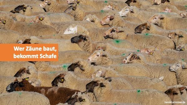 Wer Zäune baut, bekommt Schafe